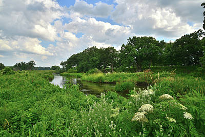 Nippersink Creek Photograph - Shoreline Of Nippersink Creek by Ray Mathis