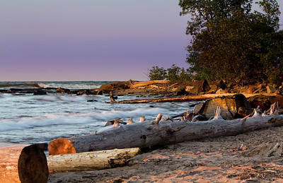Photograph - Shorline Timbers by Patti Deters