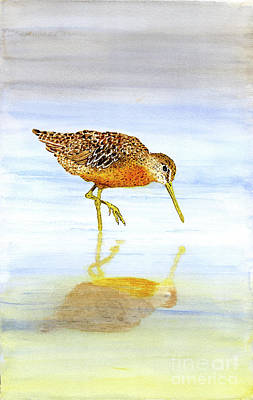 Painting - Short-billed Dowitcher by Thom Glace