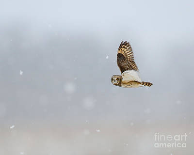 Photograph - Short Eared Owl In The Snow Storm by Heather King