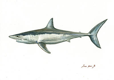 Shortfin Mako Shark Art Print