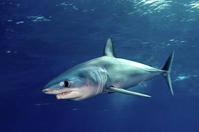On The Move Photograph - Shortfin Mako Sharks by James R.D. Scott