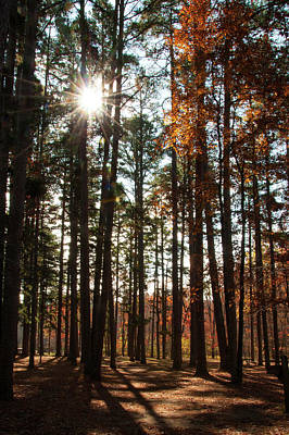 Photograph - Shortleaf Pine by Steve Stuller