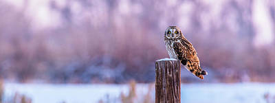 Photograph - Shorty Owl At Sundown by Yeates Photography