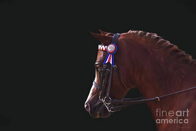 Photograph - Show Pony by Michelle Wrighton
