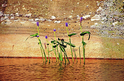 Photograph - Showcasing Pickerel Weed by Debbie Oppermann