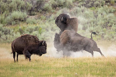 Photograph - Showdown by Sandy Sisti