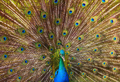 Avian Photograph - Showing Your Colors by Mike  Dawson