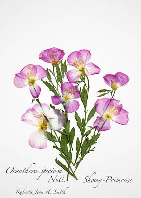 Photograph - Showy-primrose by Roberta Jean Smith