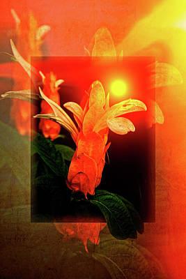 Photograph - Shrimp Flowers by Debra and Dave Vanderlaan