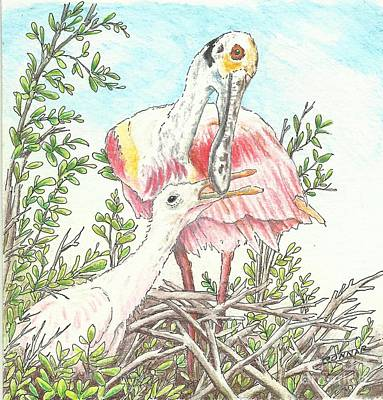 Spoonbill Drawing - Shrimp For Breakfast by Sue Bonnar