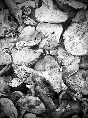 Photograph - 'shrooms by Mario Perron