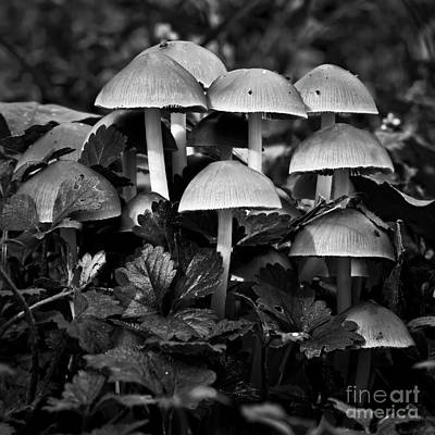 Photograph - Shrooms by Patrick M Lynch