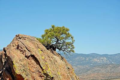 Photograph - Shrub And Rock At Canon City by Robert Meyers-Lussier