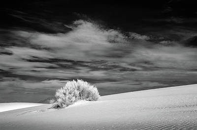 Photograph - Shrub At White Sands by James Barber