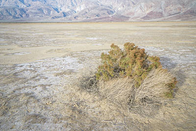 Photograph - Shrub On Clark Dry Lake by Alexander Kunz