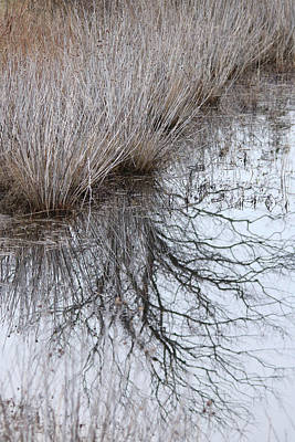 Photograph - Shurbs In Winter Marsh by Captain Debbie Ritter