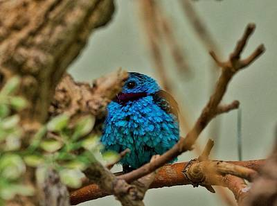Photograph - Shy Bird by Richard Keer