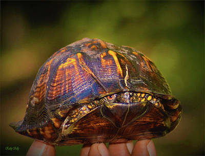 Digital Art - Shy Box Turtle by Kathy Kelly