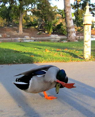 Photograph - Shy Duck by Radical Reconstruction Fine Art Featuring Nancy Wood
