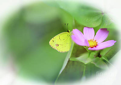 Photograph - Shy Little Yellow Butterfly by Karen Adams