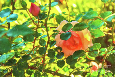 Photograph - Shy Rose Aglow by Kay Brewer