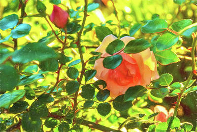 Photograph - Sketchy Rose by Kay Brewer