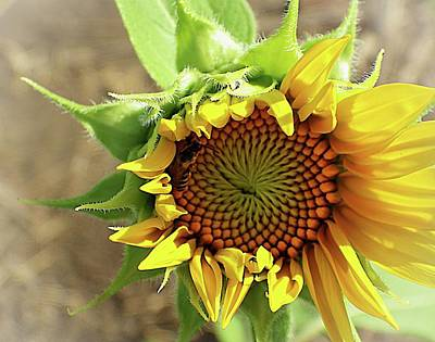 Photograph - Shy Sunflower by Karen McKenzie McAdoo