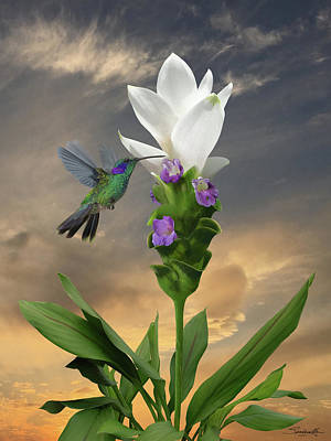 Digital Art - Siam Sparkling Curcuma And Hummingbird by IM Spadecaller