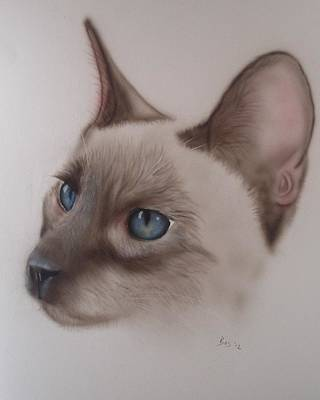 Painting - Siamese Cat by Bas Hollander