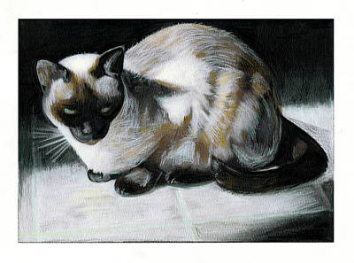 Color Pencil Drawing - Siamese Cat by Turtle Caps
