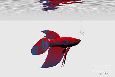 Siamese Fighting Fish Print by Corey Ford