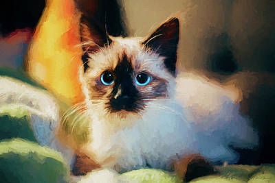 Painting - Siamese Kitten - Painting by Ericamaxine Price