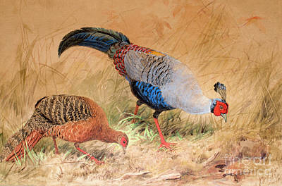 Eating Painting - Siamese Pheasant  by Joseph Wolf