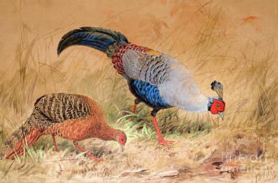 Pheasant Painting - Siamese Pheasant  by Joseph Wolf
