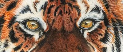 Sib Tig Eye Art Print by Laurie Bath