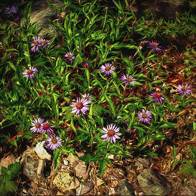 Photograph - Siberian Asters by Fred Denner