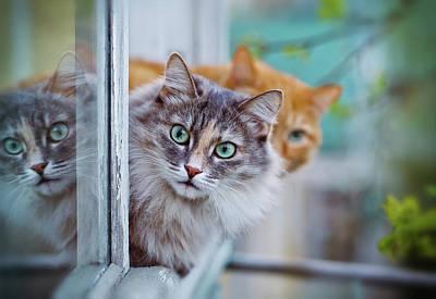 Summer Photograph - Siberian Gray Cat by Oksana Ariskina