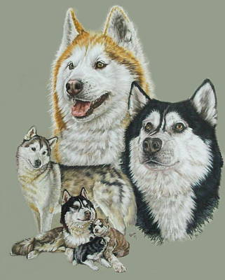 Purebred Dogs Drawing - Siberian Husky by Barbara Keith