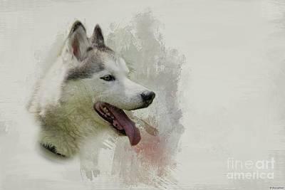 Photograph - Siberian Husky Portrait by Eva Lechner