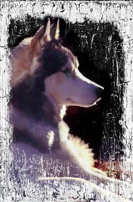 Digital Art - Siberian Husky by Rusty R Smith