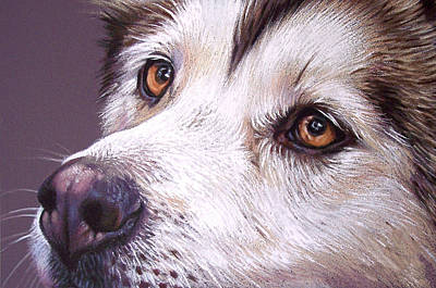 Dog Close-up Drawing - Siberian Husky by Elena Kolotusha