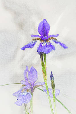 Digital Art - Siberian Iris by Mark Mille
