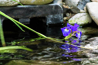 Photograph - Siberian Iris On The Water by Mick Anderson