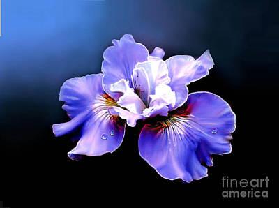 Siberian Iris Print by Robert Foster