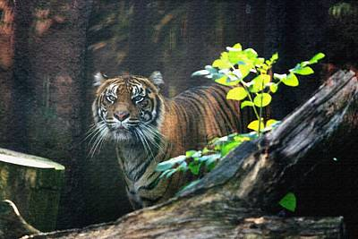 Photograph - Siberian Tiger In Canvas by David Dunham