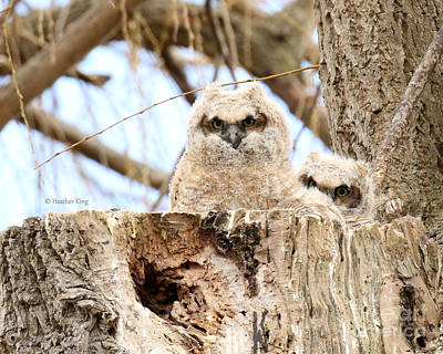 Photograph - Sibling Espionage by Heather King