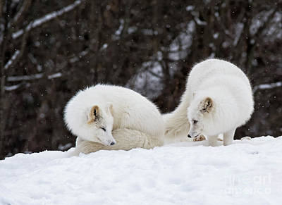 Photograph - Sibling Love by Nina Stavlund