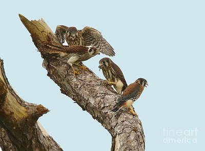 Photograph - Sibling Rivalry by Myrna Bradshaw