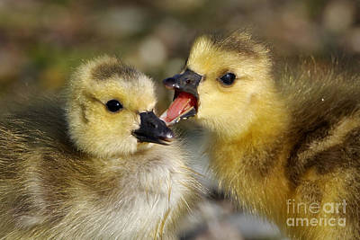 Photograph - Sibling Rivalry by Sue Harper